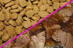 Pâtée et croquettes pour chien