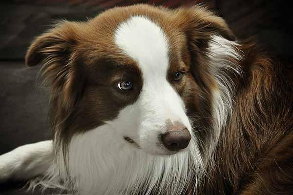 accessoires insolites pour chien