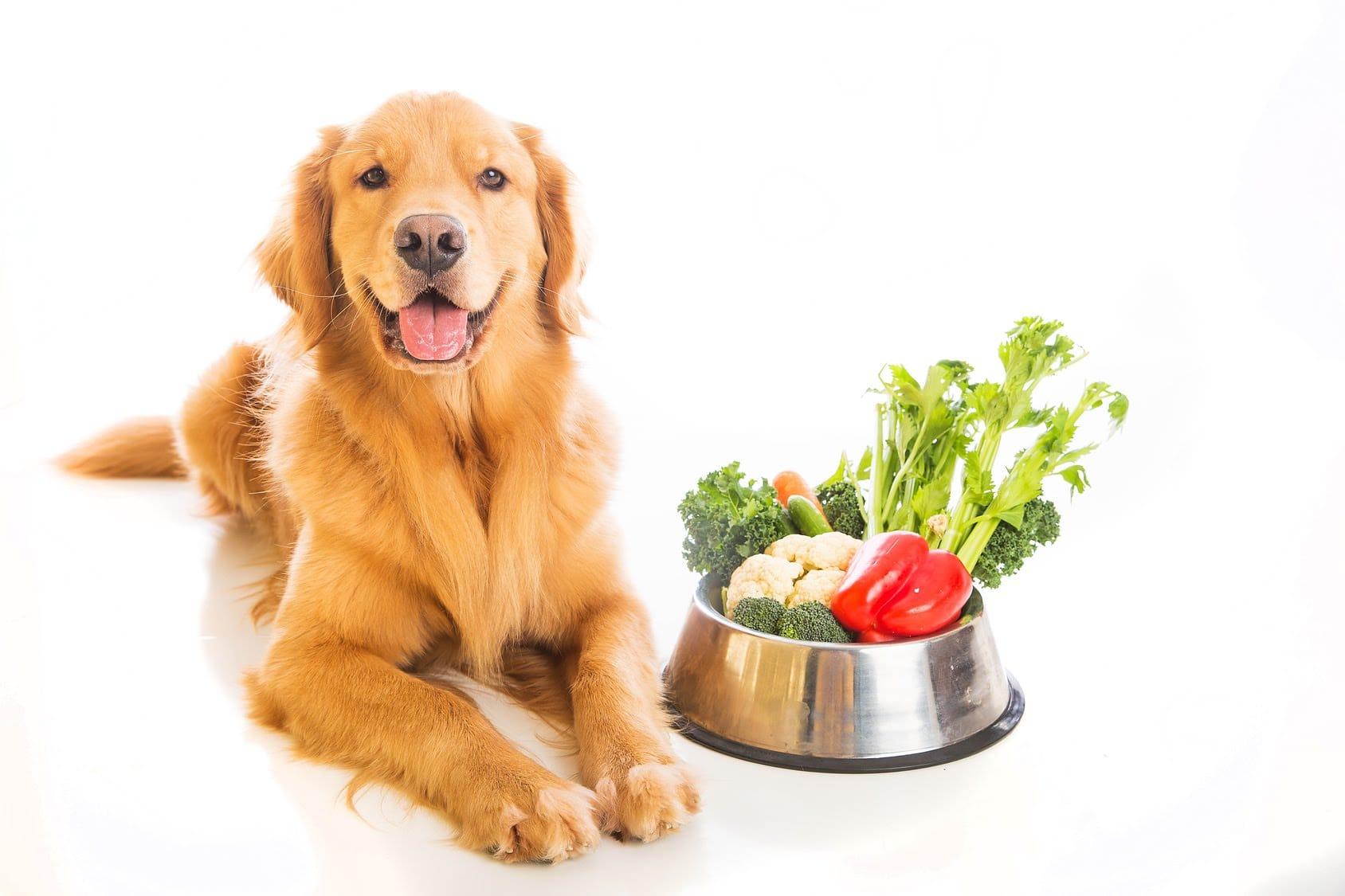 légumes pour chien
