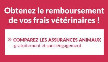 Obtenir le remboursement de ses frais vétérinaires