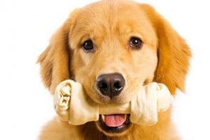 friandise chien