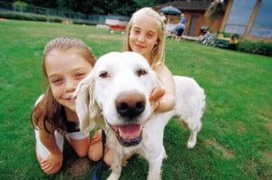 famille d'accueil pour chien