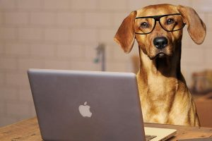 Le chien intelligent