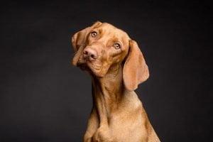 Les avantages de la stérilisation du chien