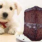 aliments toxiques pour le chien