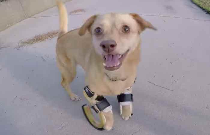 Daisy la petite chienne handicapée