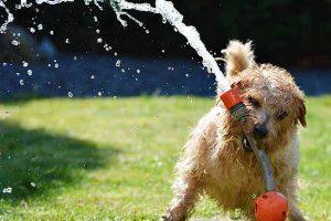 sécuriser son jardin pour son chien