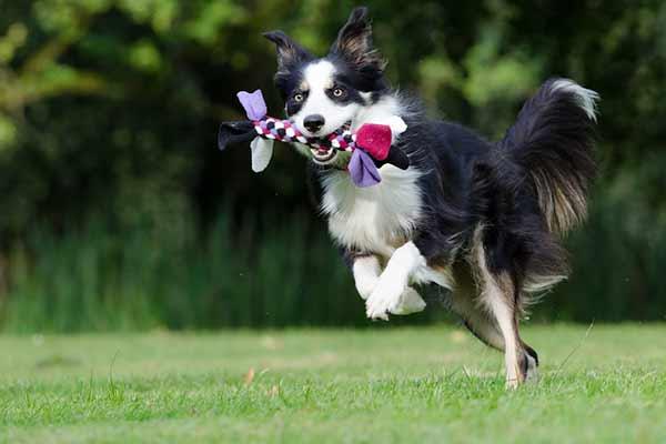 chien hyperactif