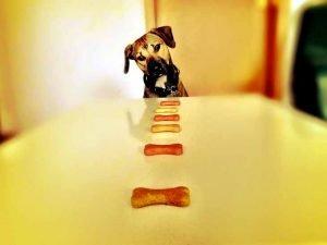 choix d'un type d'alimentation pour chien