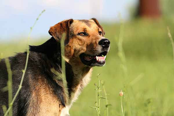 durée de la promenade du chien