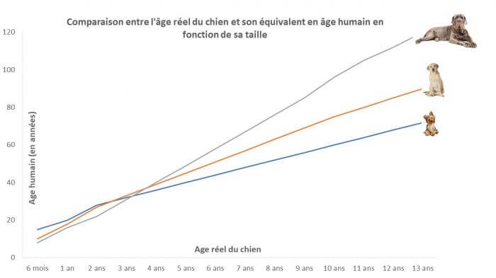 Comparaison entre l'âge réel et l'âge humain des chiens en fonction de leur taille