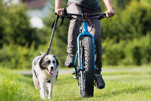 faire du cani vtt avec son chien