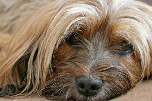 flatulences du chien