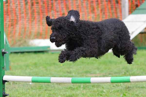 le jumping un sport canin
