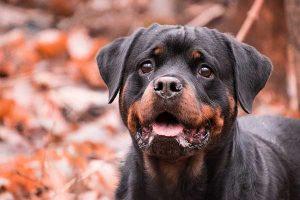 Assurance responsabilité civile pour chien