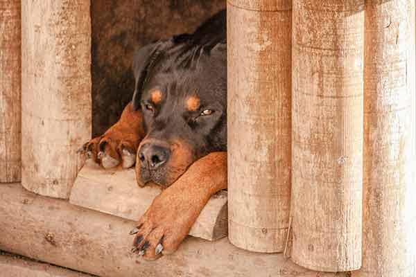 Choisir une niche pour son chien 549635bc793a