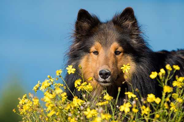 les plantes toxiques pour le chien