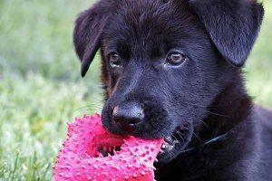 les bienfaits de jouer avec son chien