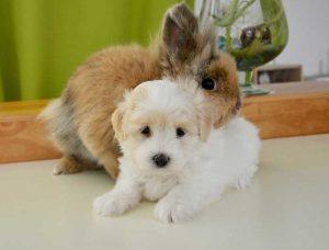 cohabitation du chien avec d'autres animaux