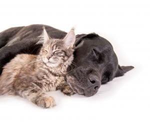 forfait-prevention-assurance-animaux