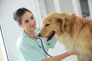 problemes-cardiaques-chien