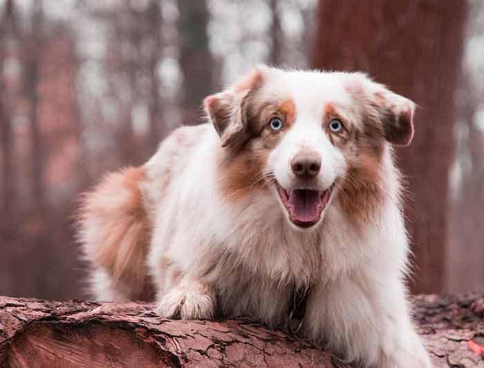 calmer un chien nerveux