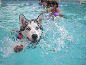apprendre à nager à son chien