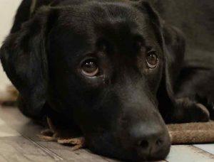 apprendre son chien faire ses besoins dehors conseils pratiques. Black Bedroom Furniture Sets. Home Design Ideas
