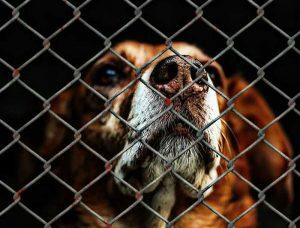 choisir un chien dans un refuge