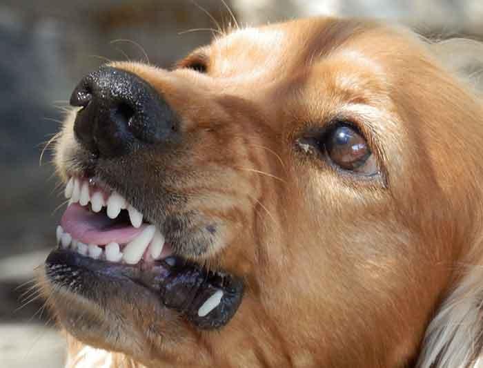 comportementaliste pour chien