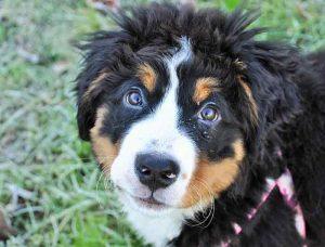 trouver un éducateur canin