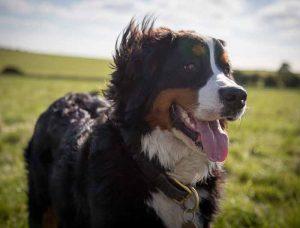 rendre un chien heureux