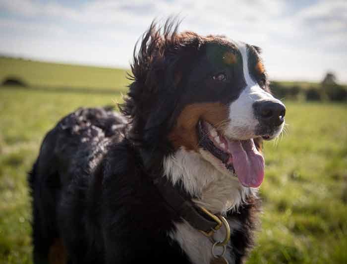 10 conseils pour rendre votre chien heureux tout ce qu 39 il faut savoir sur chiens. Black Bedroom Furniture Sets. Home Design Ideas