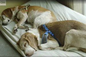 Monkey's House, un havre de paix pour des chiens malades en phase terminale