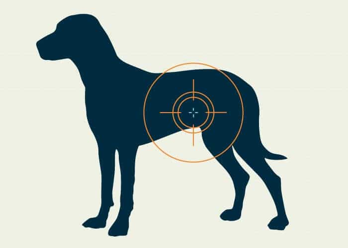 Occlusion intestinale du chien : symptômes et traitements