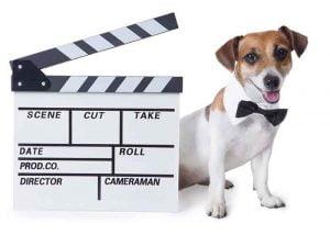 les chiens stars du festival de Cannes