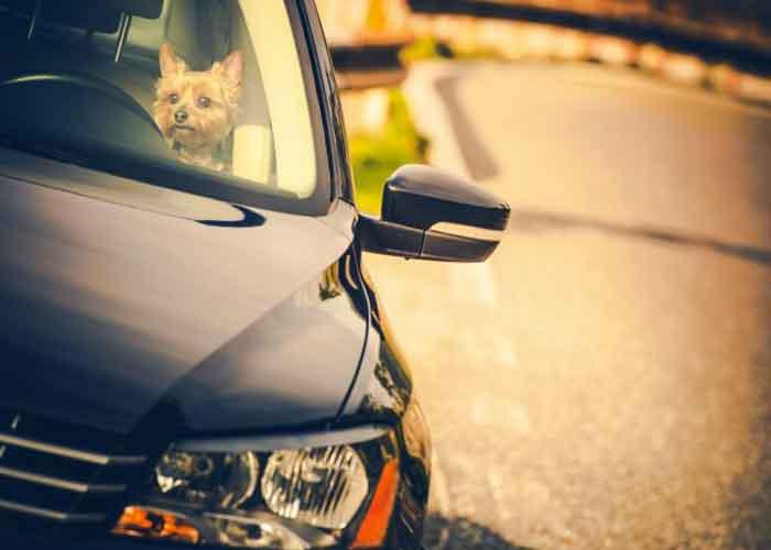 Un chien enfermé dans une voiture au soleil