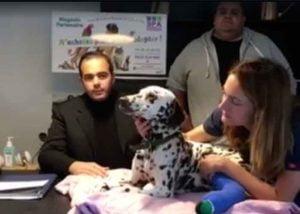 Djorky le dalmatien maltraité est soigné à la SPA de Marseille