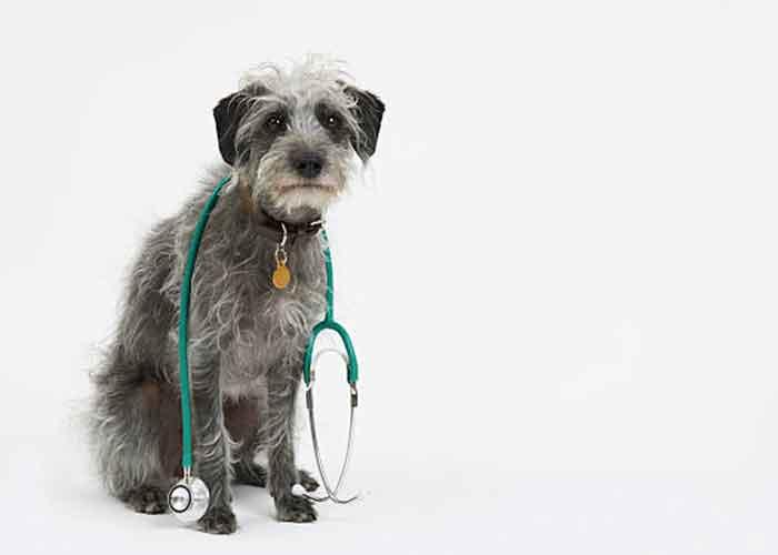 L'oedème pulmonaire du chien