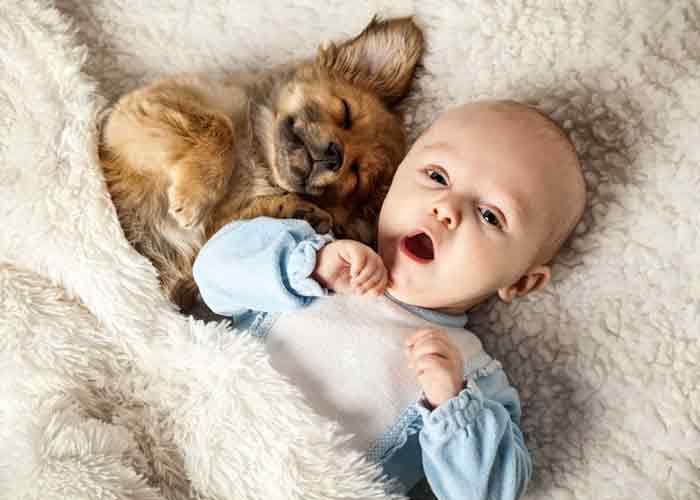 Un bébé et un chien