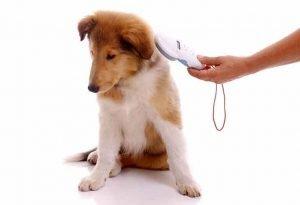 Puce electronique d'identification du chien et son lecteur