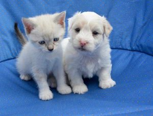 assurance chien chat pas chere