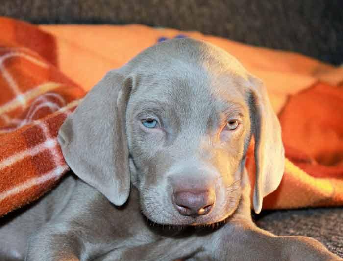 contrat d'assurance chien