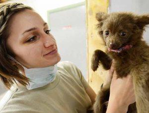 assurance et vétérinaire comportementaliste