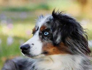 conditions pour souscrire une assurance animaux