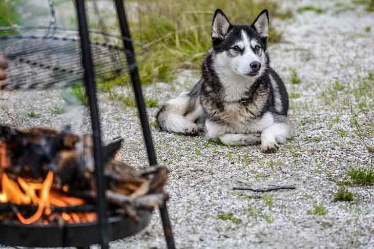 Un barbecue est dangereux pour le chien