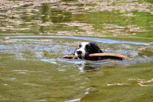 Un chien qui se baigne dans l'Ardèche