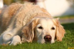 assurer un chien de plus de 6 ans