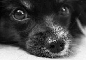assurance pour chien de plus de 8 ans