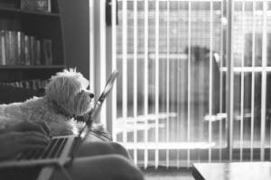 comparateur d'assurances pour chien